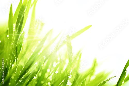 Świeża trawa i słońce