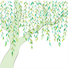Willow. Graphic design. Vector background
