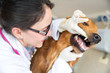 Doctor checking teeth of a dog