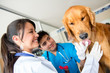 Doctors checking a dog