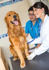Doctors examining a dog