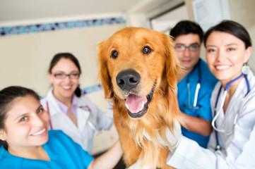 Cute dog at the vet