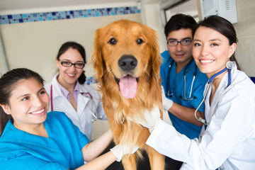 Group of doctors at the vet