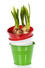 pots with spring flower bulbs