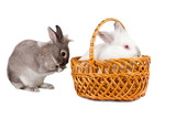 Two lovable Easter bunnies poster