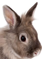 Head portrait of a beautiful rabbit