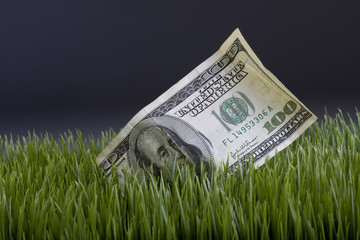 Cash in the Grass.