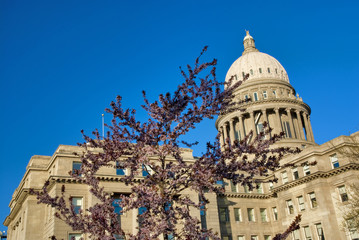 Capital building and blooming tree
