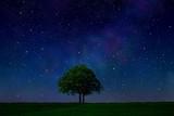 Fototapety 星空と木