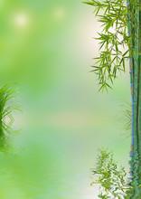 composition nature asiatique