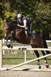 Horsewoman putting horse over the jumps