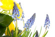 l'aiuola di primavera