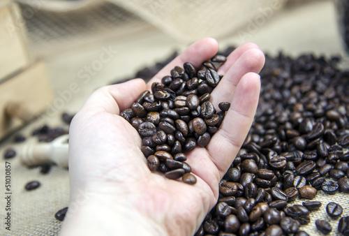 Kaffeeauslese