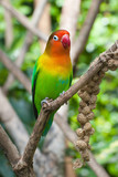 Lovebird perched on a branch