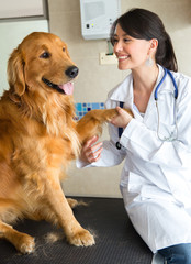 Vet with a cute dog