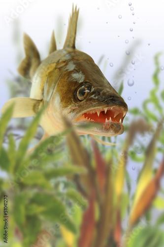 Fische 43
