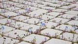 pavage fleuri - 51043614