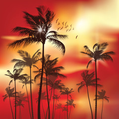 Exotic Palm Trees at sunset Background