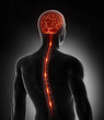 Spinal cord nerve energy impulses into brain