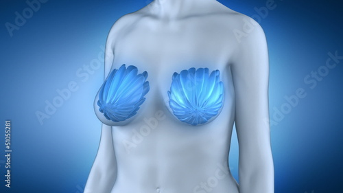 Woman breast anatomy