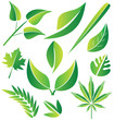 Set of green stylized leafs illustration vector