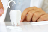 dentist holding dental floss with molar, flossing teeth concept