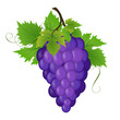 Bunch of a grapes, vector illustration