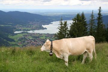 Kuh über dem Tegernsee