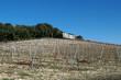 vignoble de vinsobres