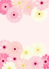 ガーベラの背景 ピンク縦