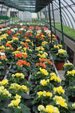 greenhouse for the intensive cultivation of flowering plants and