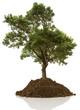 arbre sur butte de terre