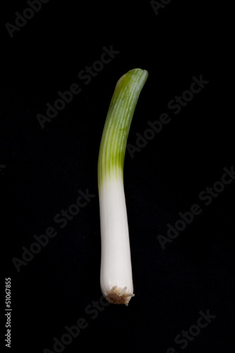 Fresh leek on black background