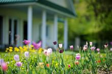 "Постер, картина, фотообои ""Beautiful colorful tulips in front of a house"""