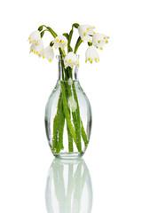 Schneeglöckchen | Märzenbecher | Frühlingsblume