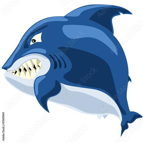 shark angry © ifh85