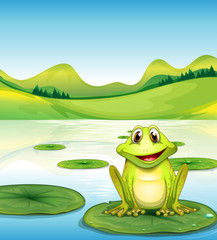 A frog above the waterlily in the pond