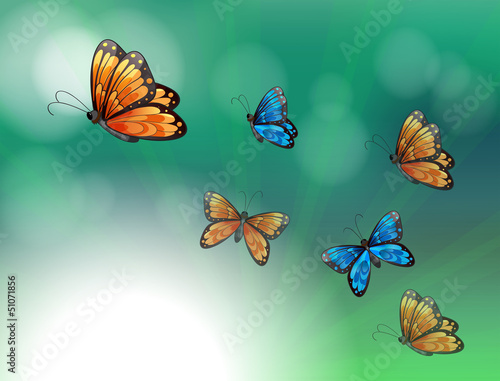 Poster Vlinders A stationery with orange and blue butterflies