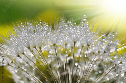 Tuinposter Paardebloemen en water dewy dandelion