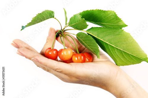 cherries with leaves on the hand close up