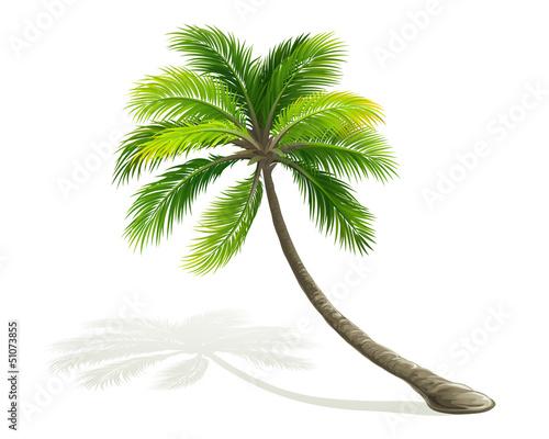 drzewo-palmowe