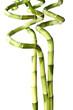 Lucky Bambou, fond blanc