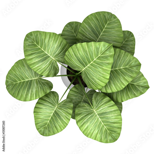 top view of palm tree in pot isolated on white background