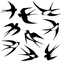Bird swallow set.