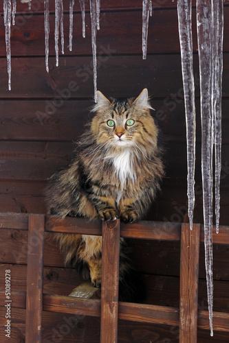 Die Katze unter den Eiszapfen