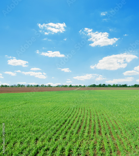 green spring field and blue cloudy sky