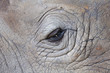 Detail of a eye great one-horned rhinoceros