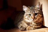nice cat - 51100472