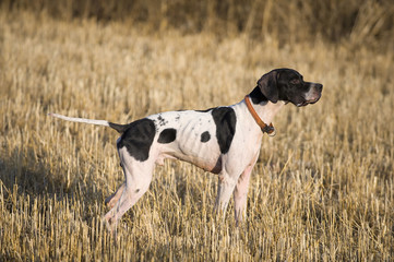 Pointer hunting