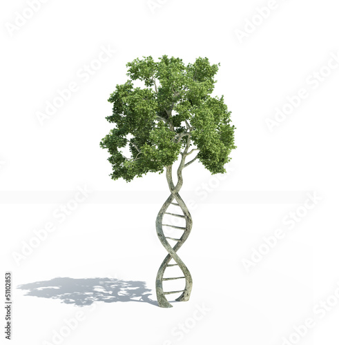 DNA shaped tree